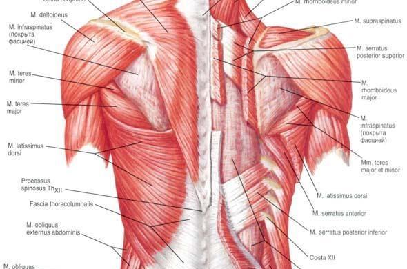 Therapeutic Massage Body Segments | Quantica720